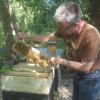 Bzzzoek de bijen in het Vondelpark vanaf 10 juni