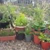 Een tuin op je balkon