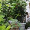 Gratis planten vinden nieuw tuinen