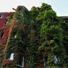 Onderscheiding Fraaie Groene Gevels in Amsterdam Zuid