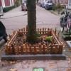 Adopt a tree pit