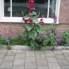 Pavement gardens