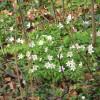 KNNV minicursus: Stinsenplanten