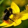 Zaai mee voor vlinders en bijen in het Gijsbrecht van Aemstelpark!