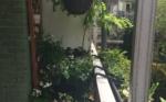 Balkontuinieren