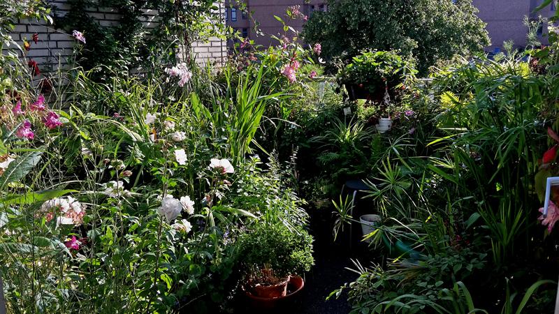 Tuinieren Op Balkon : Maak een groene oase op de balkon natuur milieuteam zuid